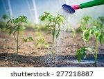 watering seedling tomato in... | Shutterstock . vector #277218887