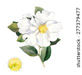 White Flower. Vector Watercolo...