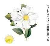 Stock vector white flower vector watercolor retro botanical illustration 277379477