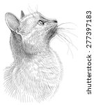 cat observes | Shutterstock . vector #277397183