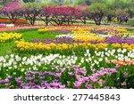 Beijing Botanical Garden Tulip...