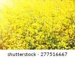 yellow blur rapeseed field.... | Shutterstock . vector #277516667