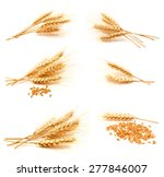 collection of photos wheat ears ...