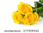 Yellow Roses Over White...