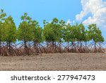 Mangrove Trees On The Beauty...