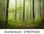 Beautiful Mysterious Forest