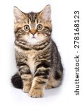 Stock photo britan kitten sitting and looking at the camera isolated on white 278168123