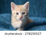 orange tabby kitten  paw up... | Shutterstock . vector #278250527