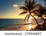 Palm Tree On The Tropical Beac...