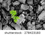 Green Plant Growing From The...
