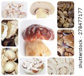 Small photo of Vegetarian food collage: mushrooms including porcini and champignons