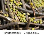 Small photo of Mung bean, mungbean, mung, green gram, golden gram, Vigna radiata, closeup, Salunkwadi, Ambajogai, Beed, Maharashtra, India