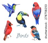 tropical rainforest parrot... | Shutterstock .eps vector #278758253