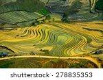 terraced rice field in water... | Shutterstock . vector #278835353