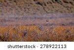 field landscape with bird... | Shutterstock . vector #278922113