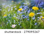 Beautiful Summer Meadow With...