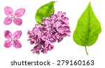 Spring Lilac Flowers With Wate...