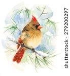 Watercolor Bird Female Cardina...