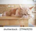 cat sleeping on wood table | Shutterstock . vector #279469253
