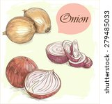 set of colorful onion sketches | Shutterstock .eps vector #279485033