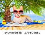 Chihuahua Dog Reading A Book...