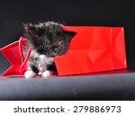 small black and white kitten... | Shutterstock . vector #279886973
