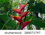 Red Palm Flower