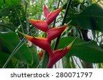 Red Palm Flower
