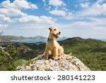 Happy Dog Breed Lakeland...
