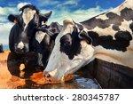 herd of cows drinking water.... | Shutterstock . vector #280345787