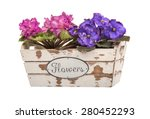 Violet Flowers In The...