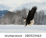 the bald eagle lands on the... | Shutterstock . vector #280525463