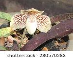 flower | Shutterstock . vector #280570283