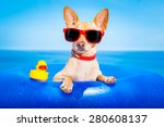 chihuahua dog  on a mattress in ... | Shutterstock . vector #280608137