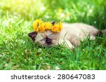 Stock photo cute little kitten crowned with a chaplet of dandelion lying on the grass 280647083