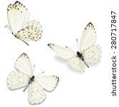 Three White Butterfly  Isolate...
