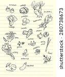 vegetable hand doodle... | Shutterstock . vector #280738673