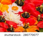 Bright Red Tulips With Black...