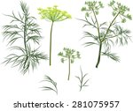 illustration with green dill... | Shutterstock .eps vector #281075957