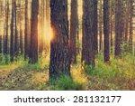 sunset in the woods  retro film ... | Shutterstock . vector #281132177