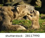 close up of a polar bear and... | Shutterstock . vector #28117990