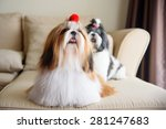 Cute Shih Tzu Is Sitting At Th...