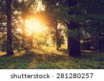 sunlight on green forest   Shutterstock . vector #281280257