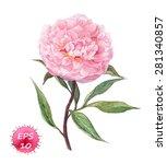 pink peony flower. watercolor... | Shutterstock .eps vector #281340857
