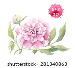 peony flower. watercolour ... | Shutterstock .eps vector #281340863