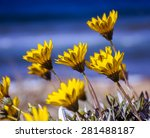 Yellow Flowers On The Beach