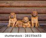 Group Bordeaux Puppy Dog...