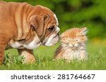 Stock photo english bulldog puppy with a little kitten 281764667