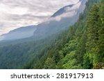 Dense Green Forest Climbing Th...