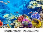wonderful and beautiful... | Shutterstock . vector #282063893